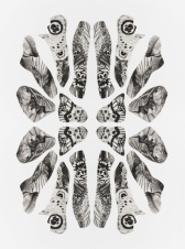 1.Pollination_Articulation_Fulcrum